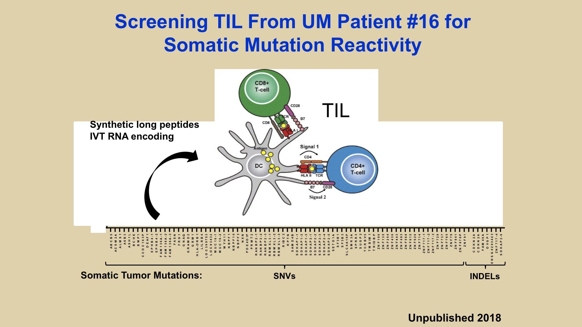 Adoptive Transfer of TIL for the Treatment of Metastatic